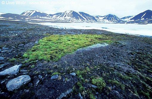 Landscape by Grahuken