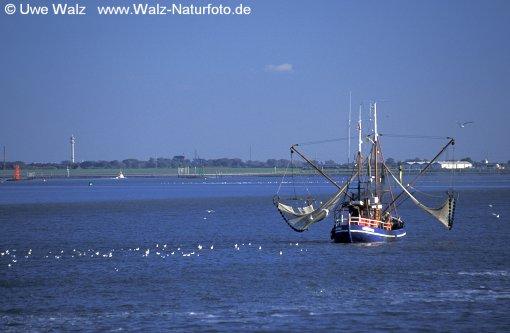 Cutter - Fishing boat