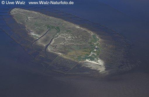 Island Norderoog