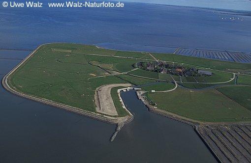Island Oland