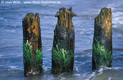 Stakes in the water