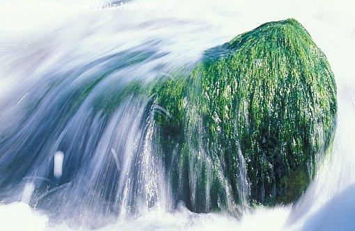 Rock - Water & Seaweed