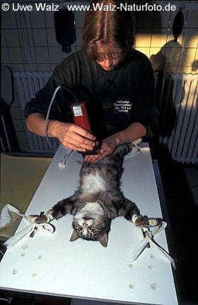 Veterinarian surgeon