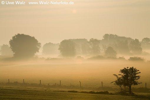 Sunrise in the morning mist