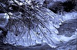 Montain Brook - Kalte Bode- Ice sculptures