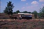 Horse coach in the Lüneburger Heide