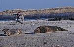 Grey Seal - Horse Head Seal