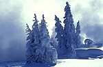 Trees as snow sculptured