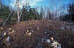 Beaver - landscape