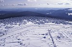 Coniferous forest in Winter/Brocken/Harz
