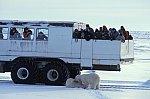 Polar Bear at Tundra Buggy