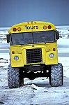 Polar Bear - Tundra Buggy