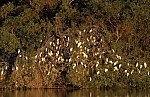 Sleep tree for Herons