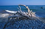 Old tree root at the beach