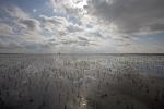 Glasswort in the Waddensea