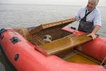 Common Seal is returned to the wild