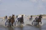 Horse race in the mud flats
