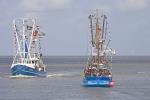 Fedderwardersiel, Crab cutters regatta, shrimp cutter regatta