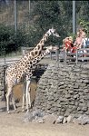 Zoo / Zoological garden  Emmen, Netherlands