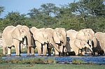 Elephants on the waterhole