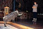 Warthog - strike an attitude