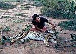 Cheetah - familiarity