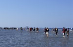 People on mud flats