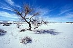 Tree in the White Sands desert