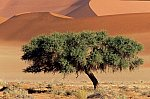 Tree and desert formation